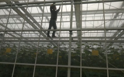 Greenhouse monitoring in Jiangsu