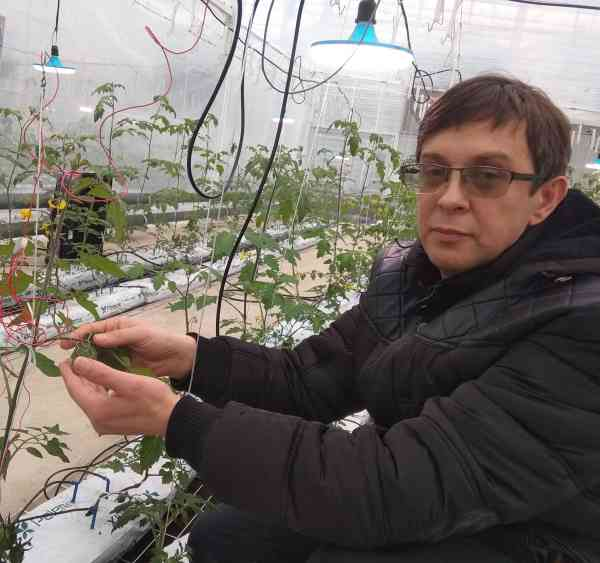 greenhouse-vitaly